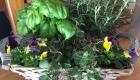 herb-garden-class--1